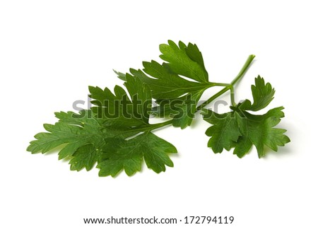 Fresh green parsley leaves on white background