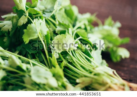 Fresh Green Parsley on Dark Brown Wooden Background, Close-up - stock photo