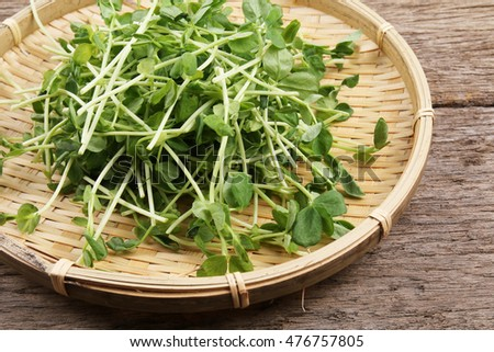 Fresh green pea sprouts in basket