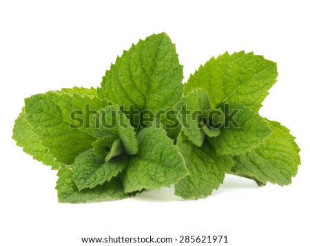 Fresh green peppermint leaves on a white background - stock photo