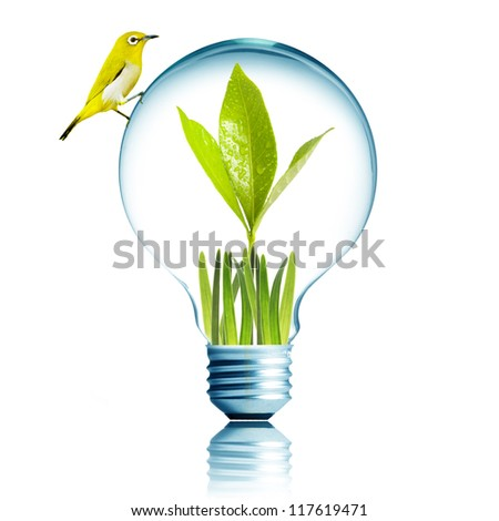Fresh green plant grow inside with green grass and water droplet. Yellow bird on top of the light bulb. Concept for environmental conservation - stock photo
