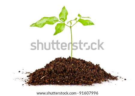 fresh green plant  in a mound of dirt - stock photo