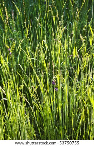 fresh green plant on the field in harmony with dew - stock photo