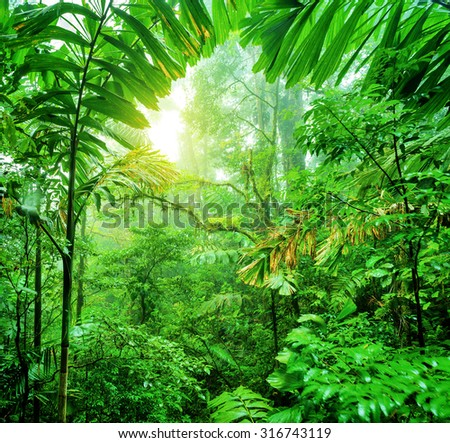 Fresh green rainforest, summer time, National park of Costa Rica, wonderful wild nature of Central America - stock photo