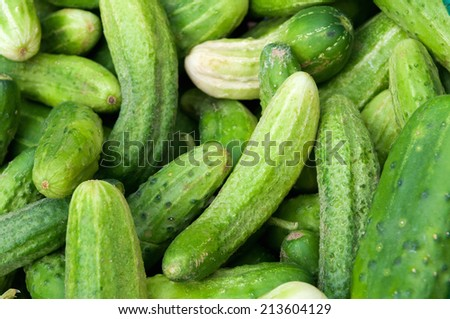 Fresh green raw cucumber for sale at local farmers market.