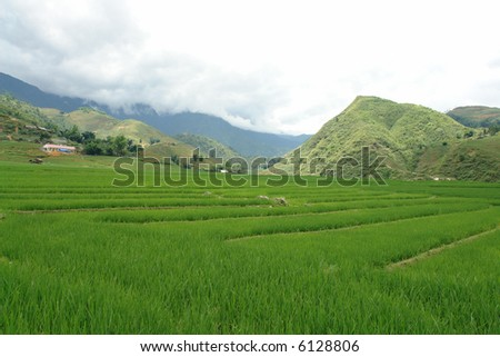 Fresh green rice paddies in the mountains of Vietnam - stock photo