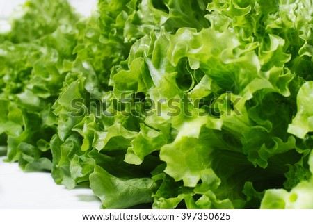 Fresh green salad lettuce leaves  isolated on a white background closeup - stock photo