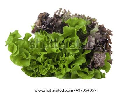 fresh green salad on white background - stock photo