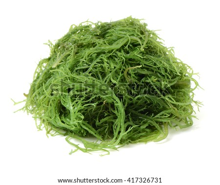 fresh green seaweed - stock photo