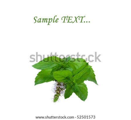 fresh green spearmint isolated