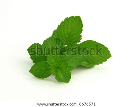 fresh green spearmint  isolated over white background - stock photo