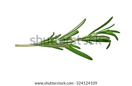 Fresh green sprig of rosemary isolated on a white background - stock photo