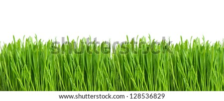 fresh green spring grass with water drops isolated on white background - stock photo