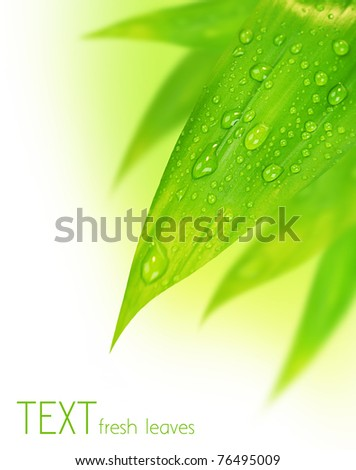Fresh green spring leaves border, with water drops isolated on white background - stock photo