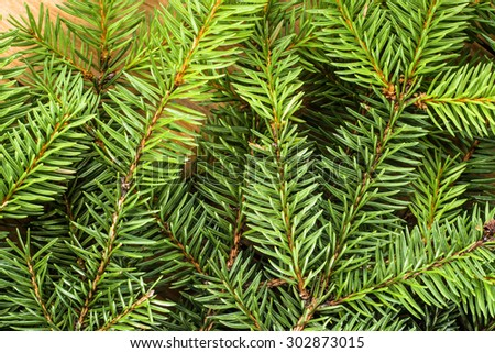 Fresh green spruce twigs detailed closeup background useful as christmas background. - stock photo