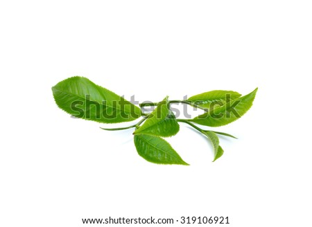 Fresh green tea leaf on white background