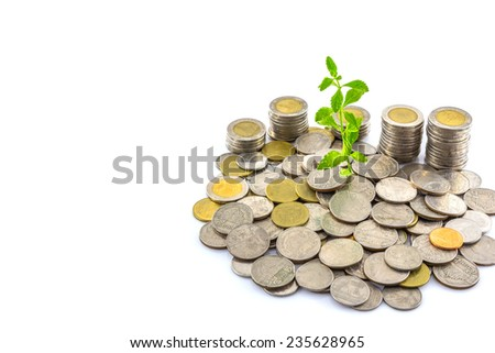 Fresh green tree growing on coins , Money - stock photo