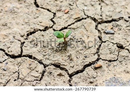 Fresh green tree growing through dry cracked soil - stock photo