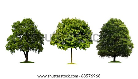 Fresh green trees isolated on white background - stock photo