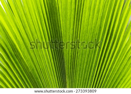 Fresh green tropical palm leaf background texture - stock photo