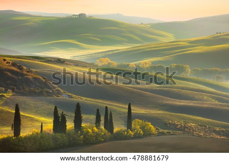 Fresh Green tuscany landscape in spring time - wave hills, cypresses trees, green grass and beautiful blue sky. Tuscany, Italy, Europe