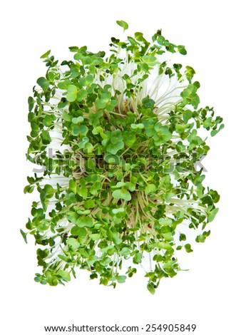 Fresh green watercress - stock photo