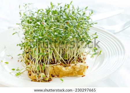 Fresh green watercress  on plate - stock photo