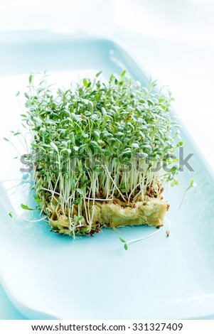 Fresh green watercress  on plate - stock photo