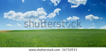 Fresh green wheat field and blue cloudy sky; ideal for nature background - stock photo
