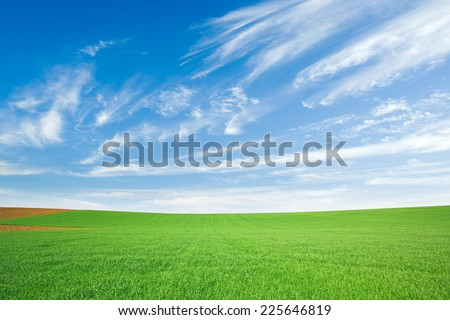 Fresh green wheat field and blue cloudy sky with cirrus clouds - stock photo