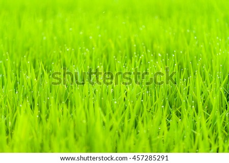 Fresh green wheat grass.selective focus. - stock photo