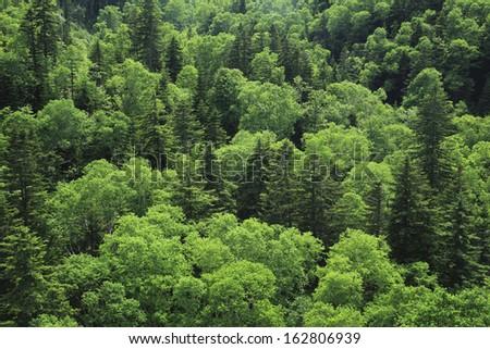 Fresh green woods in Daisetsu Zan National Park - stock photo