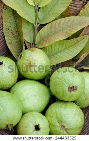 Fresh Guava fruit  good for health. - stock photo