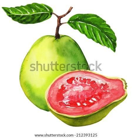fresh guava fruit isolated on white background - stock photo