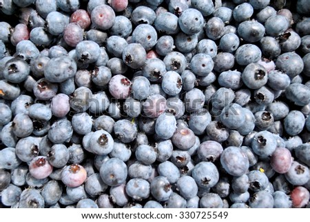 Fresh Hand Picked Blueberries - stock photo