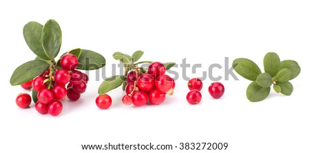 Fresh hand-picked forest Cowberry isolated on white background