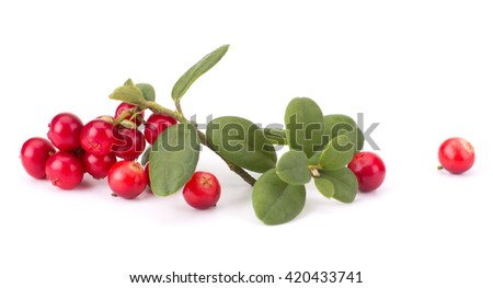 Fresh hand-picked forest Cowberry isolated on white background - stock photo