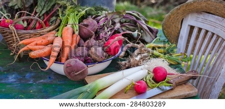 Fresh harvest from the garden. Organic Local produce concept. Banner.  - stock photo