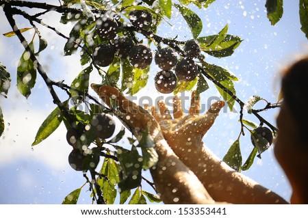 fresh harvest in hand - stock photo