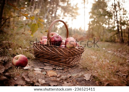 Fresh harvest of apples. Nature theme with red grapes and basket - stock photo