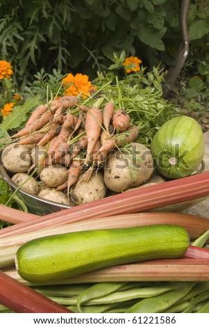 Fresh Harvest of Garden Grown Organic Vegetables, Grown Your Own, Sheffield, England - stock photo