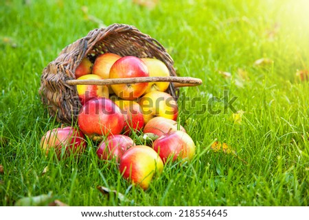Fresh harvested apples in basket on grass - stock photo