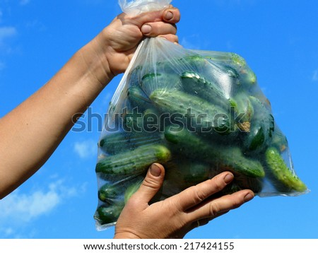 fresh harvested cucumbers in plastic bag - stock photo