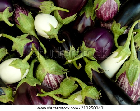 fresh harvested eggplants of different varieties - stock photo