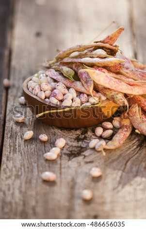 Fresh harvested pinto / cranberry beans with pods on a wooden background on a sunny day. Also available in horizontal format.