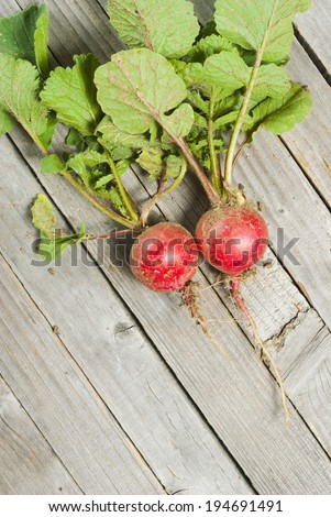 fresh harvested radishes with dirt on roots, old wood table background - stock photo