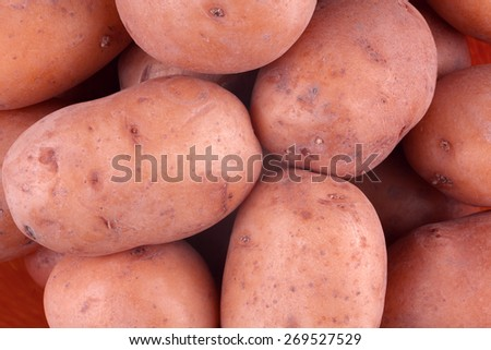 Fresh harvested red potato tubers - stock photo