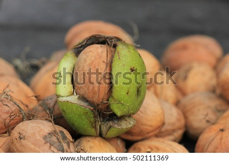 Fresh harvested walnuts in autumn sunlight