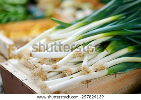 Fresh healthy bio leek on Paris farmer agricultural market - stock photo