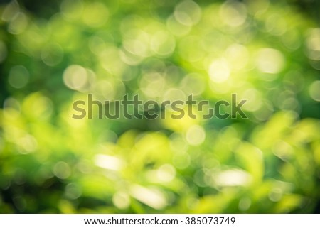 Fresh healthy green bio and eco nature theme with abstract blurred foliage and bright sunlight. Sunny bokeh green nature defocused background. Selective soft focus with shallow DOF. Vintage style. - stock photo
